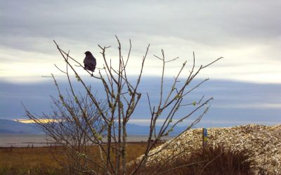Bird and Wildlife Photography from Beach to Bay