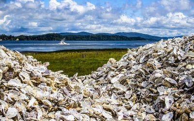 Pile of oyster shells in Nahcotta