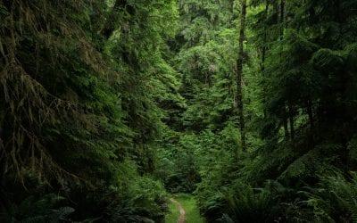 Willapa National Wildlife Refuge Cutthroat Climb