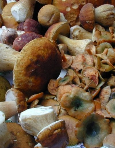 THE LONG BEACH PENINSULA INVITES VISITORS TO SAVOR THE EARTHLY DELIGHTS OF AUTUMN DURING THE WILD MUSHROOM CELEBRATION, OCT. 1 THROUGH NOV. 15, 2018