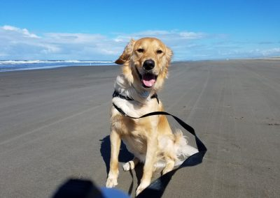 beach dog of the month 2019