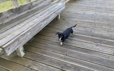 A Dog-Friendly Getaway to the Long Beach Peninsula